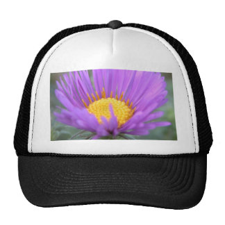 New England Aster Mesh Hat