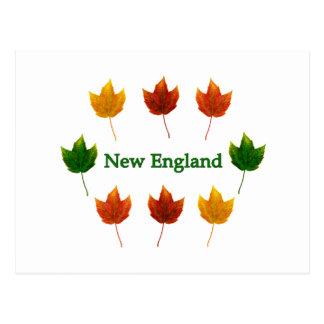 New England Fall Leaves Postcard