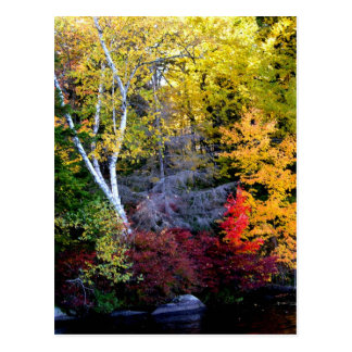 New England Foliage Postcard