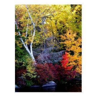New England Foliage Post Card