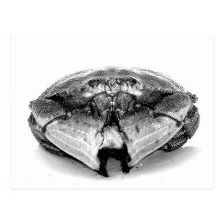 New England Rock Crab I Postcard
