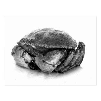 New England Rock Crab II Postcard