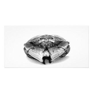 New England Rock Crab Photo Card