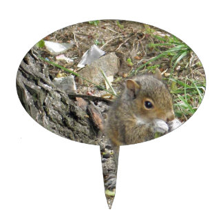 new england squirrel enjoying a tasty snack cake toppers