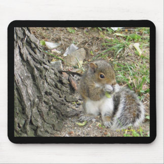 new england squirrel enjoying a tasty snack mouse pad