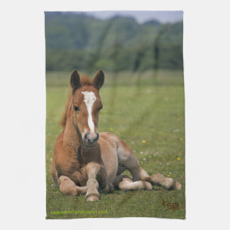 New Forest Foal Kitchen Towel