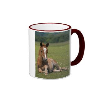 New Forest Foal Mug
