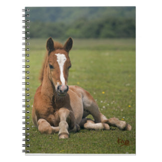 New Forest Foal Notebook