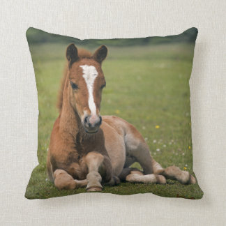 New Forest Foal Pillow