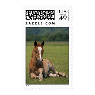 New Forest Foal Postage