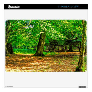 New Forest National Park Hampshire England Woods Decals For MacBook Air