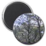 New Forest near Linford Fridge Magnet