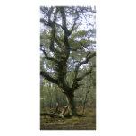 New Forest tree Custom Rack Card
