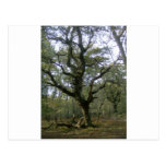 New Forest tree Post Cards
