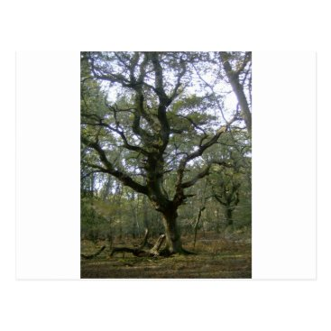 davewilks New Forest tree Postcard