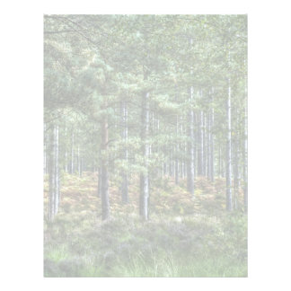 New Forest Woodlands HDR Photo Letterhead