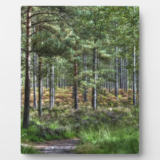 New Forest Woodlands HDR Photo Plaque