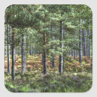 New Forest Woodlands HDR Photo Square Stickers