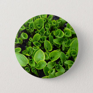 New green hosta plants in garden pinback button