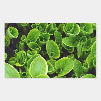 New green hosta plants in garden rectangular sticker