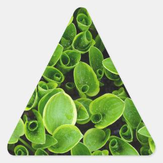 New green hosta plants in garden triangle sticker