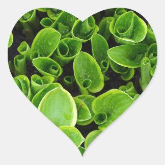 New green hosta plants in garden heart sticker