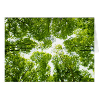 New green leaves card