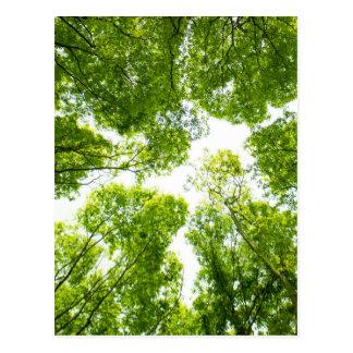 New green leaves postcard