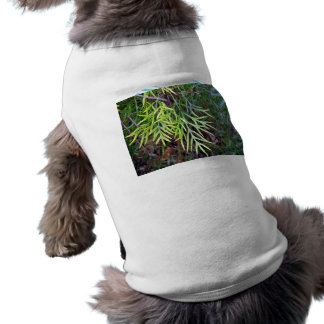 New-growth yellow and green leaves on bush pet tee