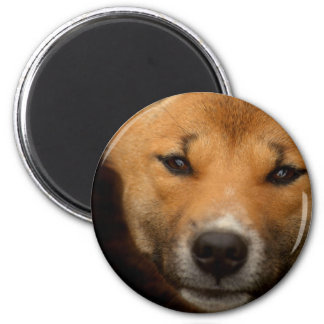 New Guinea Singing Dog 2 Inch Round Magnet