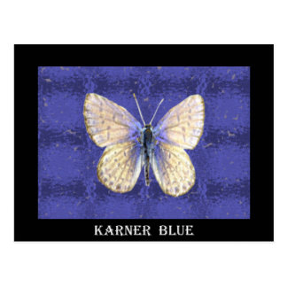 New Hampshire Karner Blue Butterfly Postcard