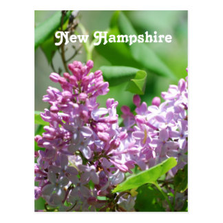 New Hampshire Lilacs Postcard