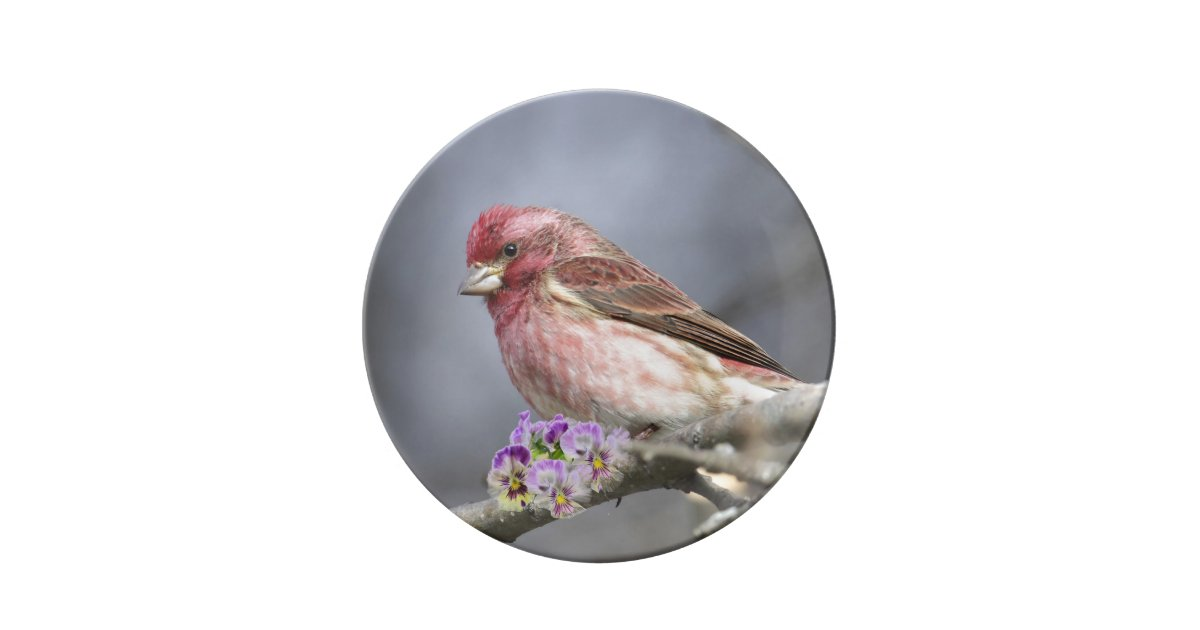 New Hampshire State Bird And Flower Dinner Plate Zazzle Com