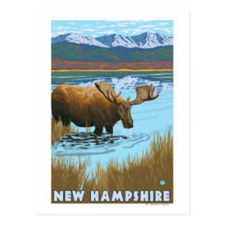 New HampshireMoose Drinking in Lake Postcard