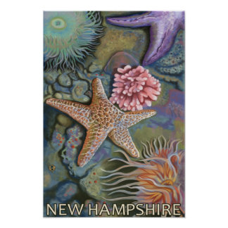 New HampshireTidepool Scene Poster