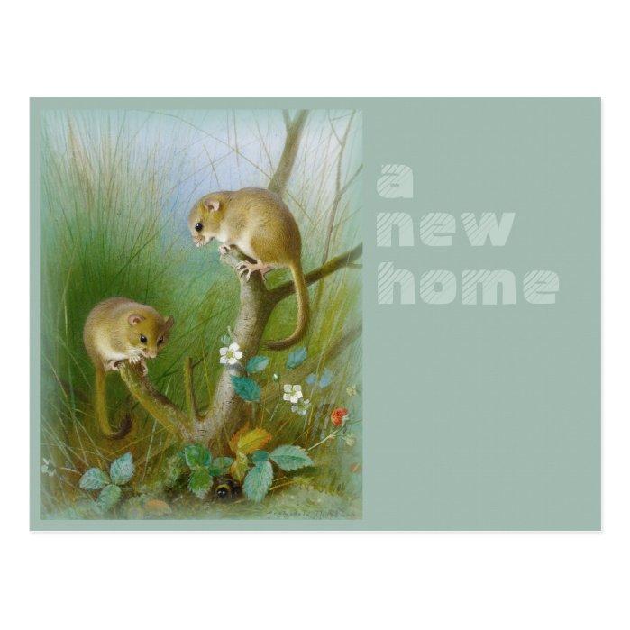 New home CC0112 Archibald Thorburn Dormice Postcard