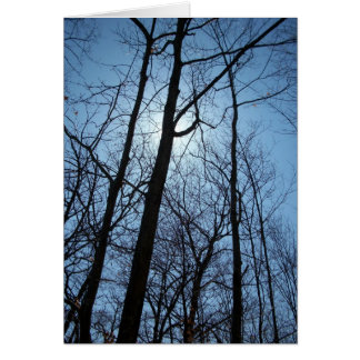 New Hope photo cards -Trees series 1