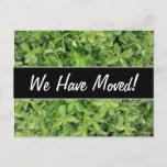 [ Thumbnail: New House; Green Hedge Shrub Type Plant Photograph Postcard ]