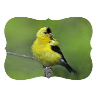 New Jersey Goldfinch 5x7 Paper Invitation Card