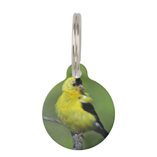 New Jersey Goldfinch Pet ID Tags