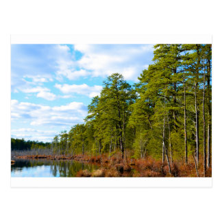 New JErsey Pine Barrens in Winter Postcard