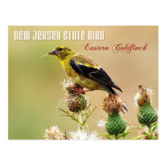 New Jersey State Bird - Eastern Goldfinch Postcard
