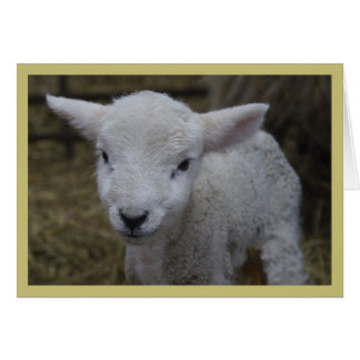 New Lamb Card