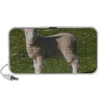 New Lamb, near Dunedin, South Island, New Mp3 Speakers
