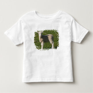 New Lamb, near Dunedin, South Island, New Toddler T-shirt