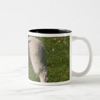 New Lamb, near Dunedin, South Island, New Two-Tone Coffee Mug
