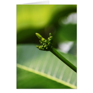 New life - Green on Green Greeting Cards