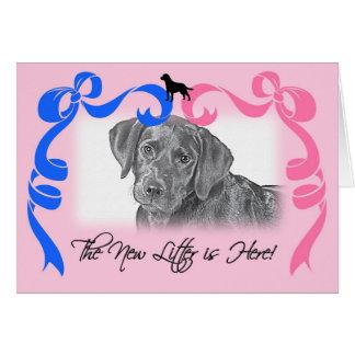 New Litter Announcement - Labrador Retriever