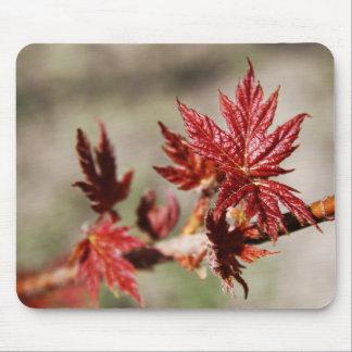 new maple leaf mousepad