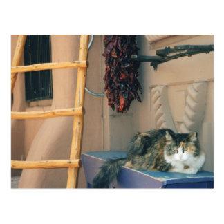 New Mexico Cat Postcard